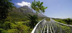 Belmond Mount Nelson Hotel recommend the Kirstenbosch Centenary Tree Canopy Walkway in Cape Town. Just opened, this long path weaves through and over the treetops of the Botanical Gardens, revealing a unique ecology. Cape Town Holidays, National Botanical Gardens, Tree Canopy, Holiday Places, Tree Tops, Most Beautiful Cities, Walkway, 6 Years, Wonders Of The World