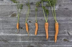 Vegetables, Harvest, Cultivation
