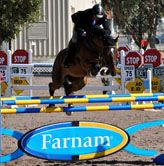 Sponsored Horse Jumps