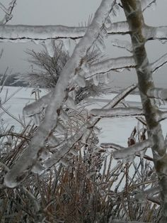 Toronto Ice Storm 2013