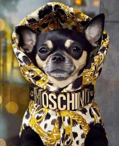 Bad And Boujee, Its Okay, Moschino, Boston Terrier, French Bulldog, Puppies, Photo And Video, Dogs, Animals