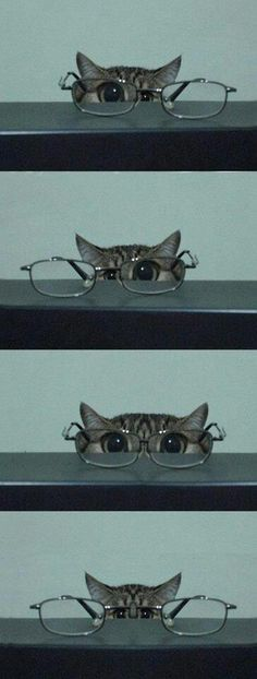 Cat glasses - cat looking through a pair of glasses with his eyes magnified - funny!