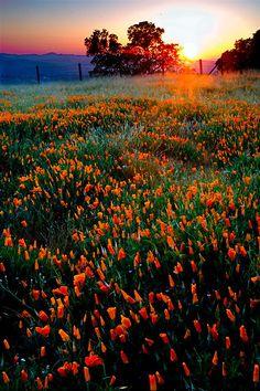"""Summer's Return""  Mt. Diablo State Park, California  Jeffrey Murray Photography"