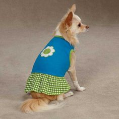 East Side Collection Gingham Sweeties Dog Dress - Blue at BaxterBoo