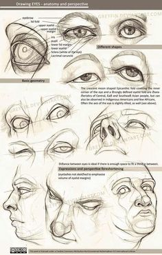Drawing eyes - anatomy and perspective by greyfin on DeviantArt - - Drawing eyes – anatomy and perspective by greyfin on DeviantArt daily drawing Zeichnende Augen – Anatomie und Perspektive von Greyfin Realistic Eye Drawing, Human Figure Drawing, Figure Drawing Reference, Drawing Eyes, Anatomy Reference, Body Drawing, Life Drawing, Human Eye Drawing, Human Anatomy Drawing