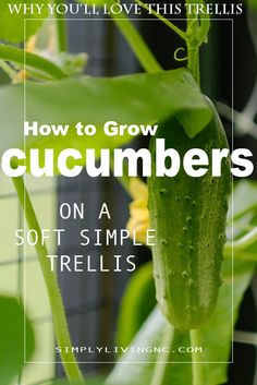 Have you ever wondered how to Grow Pickling Cucumbers on a Simple Trellis in your Garden? Wouldn't you simply adore reaching in your refrigerator to grab a hand grown pickle! You're probably thinking it's too much work, too hard of a process to pickle my cucumbers. Well, I'm here to tell ya, it's not….it's actually quite easy to grow cucumbers for pickles. #pickles #garden #growyourownfood #cucumbers #pickling Outdoor Plants, Garden Plants, Outdoor Gardens, Container Vegetables, Pickling Cucumbers, Grow Your Own Food, Gardening For Beginners, Plant Care, Growing Vegetables