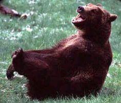 Laugh Bear