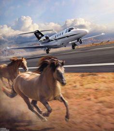 Студия Fiero Animals - самолёты, вертолёты, автомобили