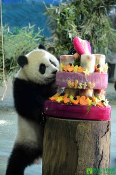 Yuan Zai's first birthday and her cake!