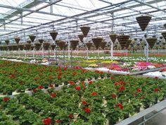 #familytreenursery Greenhouse