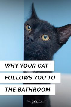 Hi cat owners! I'm a cat owner too and I write this article because of the mistakes I did to my cat, and I didn't even know because I didn't try to know what cat Cute Cats, Funny Cats, I Love Cats, Silly Cats, Cat Behavior Problems, Dog Behavior, Chesire Cat, Cat Hacks, Kitten Care