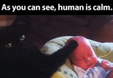 This is my human pet…hope my cats take care of my baby girl once she arrives :)