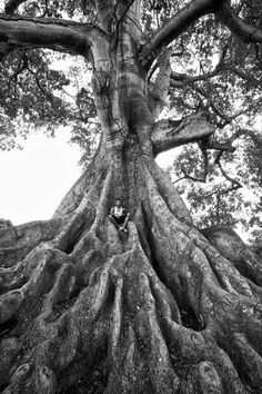 Tree of Life Photo by Eladio Fernández -- National Geographic Your Shot