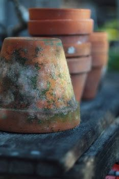 I love clay pots, especially old ones with moss growing on them. Stacks of old pots in a potting shed makes me smile. Pot Jardin, Vintage Gardening, Potting Sheds, Potting Benches, Clay Pots, Garden Pots, Garden Sheds, Beautiful Gardens, Container Gardening