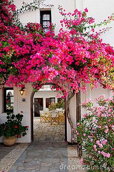 pink-bougainvillea-22602696 | pilfering perfection | Flickr