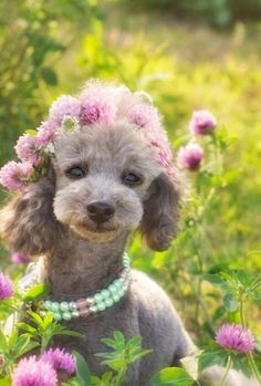 Little grey girl in red clover looks like a 10 to me just beautiful