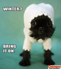puppy winter clothes