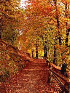 Beim Spaziergang im Broichbachtal aufgenommen.