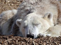 She gave in and sacked out! | Flickr - Photo Sharing!