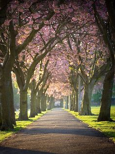 Meadows in Edinburgh. I would adore this walk!