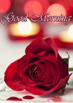 Beautiful Good Morning Images , Quotes And Message Good Morning Images And Good Morning Quotes :- Thank You For Visiting Our Website. Good Morning Roses, Good Morning Images Flowers, Good Morning Cards, Good Morning Beautiful Images, Good Morning Photos, Good Morning Good Night, Morning Msg, Latest Good Morning Images, Morning Sweetheart