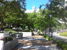 Saturday's good morning♪Kobe,sunny sky☆Autumn's coming,because volume of the cicada's cry is as small as a half in this street lined with trees.