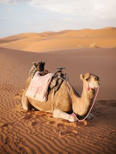 Morocco, Wes Sumner