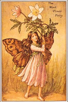 The Wind flower Fairy.