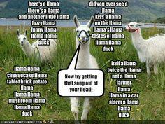 THE LLAMA SONG!!!!