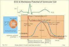 Recordings of ECG