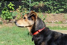 #animal #canine #dog #grass #pet