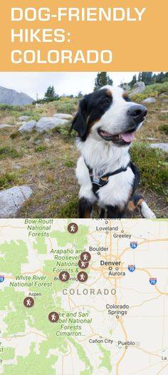 Great hikes you can do with your dog in Colorado!