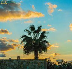 Palm tree at sunset..