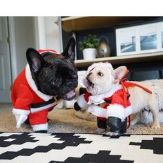 #BadSanta s.... when you hire a #santaclause and 2 show up for the job.... @olivefrenchie