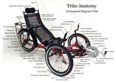 Trike anatomy