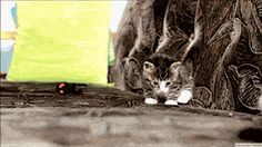 "Cute Little Animal gifs | ""Umm....ta-da! I totally meant to do that."""