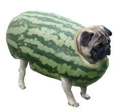 waterpugmelon