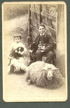 Antique Victorian photo of a big woolly sheep, a border collie and her puppy, a kitten, and two young farm boys. Antique Photos, Vintage Pictures, Vintage Photographs, Old Pictures, Vintage Images, Vintage Dog, Vintage Children, Tier Fotos, Old Dogs