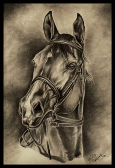 Distant Champion by Fire-n-ash on DeviantArt Wood Burning Crafts, Wood Burning Patterns, Wood Burning Art, Pencil Art Drawings, Animal Drawings, Art Sketches, Animal Stencil, Bear Pictures, Equine Art