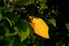 Autumn is coming by Matthew Vavrek on Plant Leaves, Autumn, Plants, Fall Season, Fall, Plant, Planets