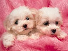 Image detail for -pink-puppies picture by se7en_madness - Photobucket