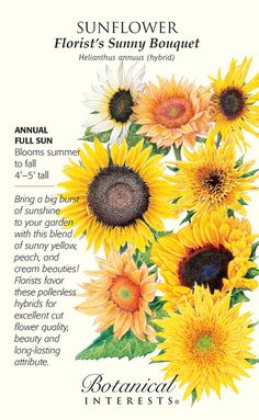 Florist's Sunny Bouquet Sunflower Seeds – 4 grams - Halloween Suggestions House Plants For Sale, Plants For Sale Online, Sunflower Garden, Sunflower Seeds, Beautiful Gardens, Beautiful Flowers, Growing Sunflowers, Planting Sunflowers, House Plant Delivery