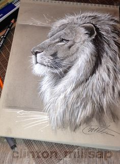 Lion Drawing, Charcoal Drawing on Toned Paper, Full Sketchpad shot, had a great time doing this, kinda zoned out for hours