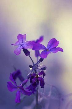 Collection violet - #bijoux en pierre semi precieuse - Visitez la boutique de bijoux en pierre naturelle : https://zemaria.fr/