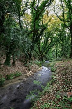 Landscapes from Greece and anything related to Greece. Greek Flowers, Forest Mountain, Tree Forest, Ancient Aliens, Flowering Trees, Ancient Greece, Forests, Country Roads, Mountains
