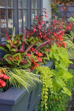 Summer Containers - Traditional - Landscape - Vancouver - Pot Incorporated