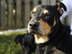 Dog named Lazarus survives euthanasia attempt