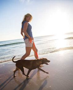 dog friendly beach hotels