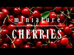 How to make miniature Cherry Cerises Polymer clay Fimo tutorial