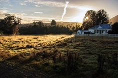 This photo was taken just after the first rays of the sun painted in gold the fields near Fox Glacier